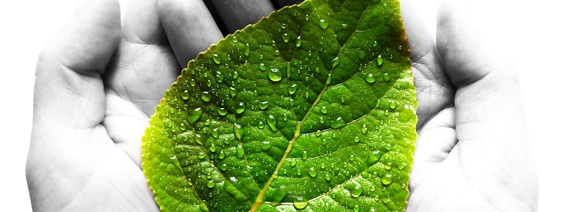 Продукция из растительных и плодово-ягодных экстрактов